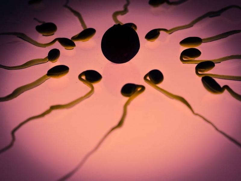 揭秘怎样提高y精子质量提高生男孩几率的诀窍